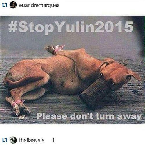 Repost @thailaayala ・・・ Repost @gio_ewbank with @repostapp. ・・・ Por favor galera vamos ajudar a compatilhar e ASSINAR a petiçao!!! 🙏 essa crueldade não pode continuar! ・・・ Repost @yasminbrunet1 ・・・ COMPARTILHEM!!! Mais de 10,000 cachorros são mortos todo ano no sul da China no Festival de Yulin. Esses cachorrinhos são roubados de suas familias e lares, puxados por uma corda amarrada no carro, tem suas peles arrancadas com eles vivos, são fervidos vivos, torturados, presos em gaiolas minúsculas com as patinhas amarradas nas costas e são espancados. VOCÊ PODE AJUDAR!!! assine a petição para que esse festivas dos horrores não exista mais!!! o link esta no meu perfil. por favor compartilhem!!! so assim poderemos ter a justiça que esses cachorrinhos merecem!!! CHEGA DE IMPUNIDADE! CHEGA DE YULIN! a mudança começa com a gente, ajudem, compartilhem! Stopyulin2015 StopYulinForever Fimdoyulin2015 assinem a peticao www.change.org/p/president-of-the-people-s-republic-of-china-stop-the-yulin-dog-eating-festival