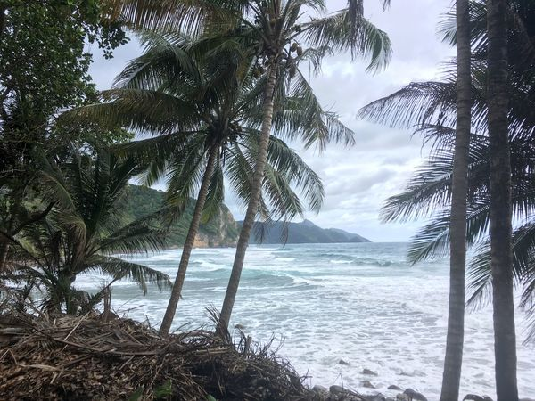 Dominican Republic Beach Beauty In Nature Day Growth Landscape Nature No People Outdoors Palm Tree Scenery Scenics Sea Sky Tranquil Scene Tranquility Tree Water
