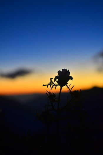 Close-up of silhouette flower against sky at sunset