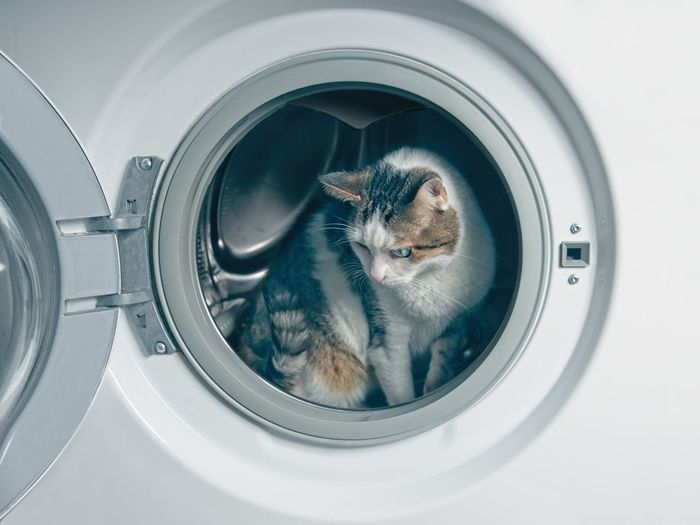 Cute tabby cat hiding in the was hing machine.