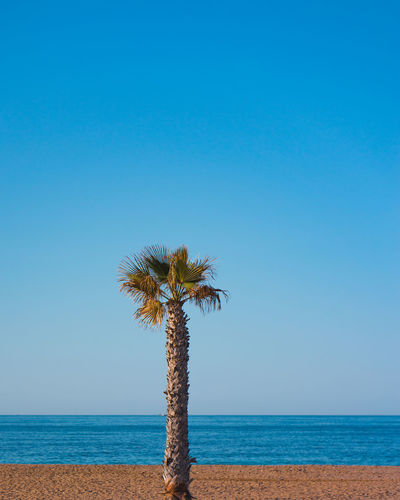 One palm with beach and clear sky in background. Palm Palm Tree Backgrounds Copy Space Magazin Theme Landing Page Vacation Time Traveling Travel Destinations Exotic Paradis Shore California Dreamin Cali California Hanging Vacation Travel Swimming Tropical Background