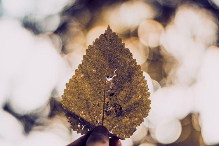 Leaves. EyeEm