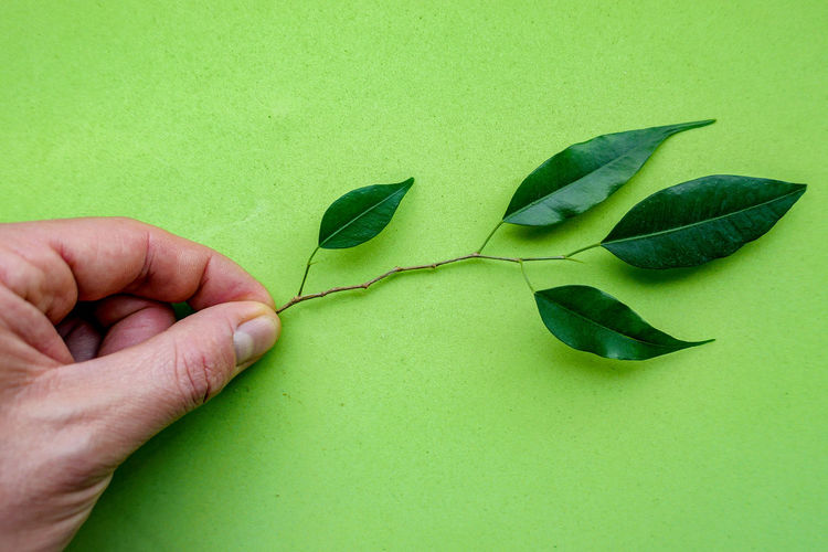 Close-up of hand holding leaf over green background