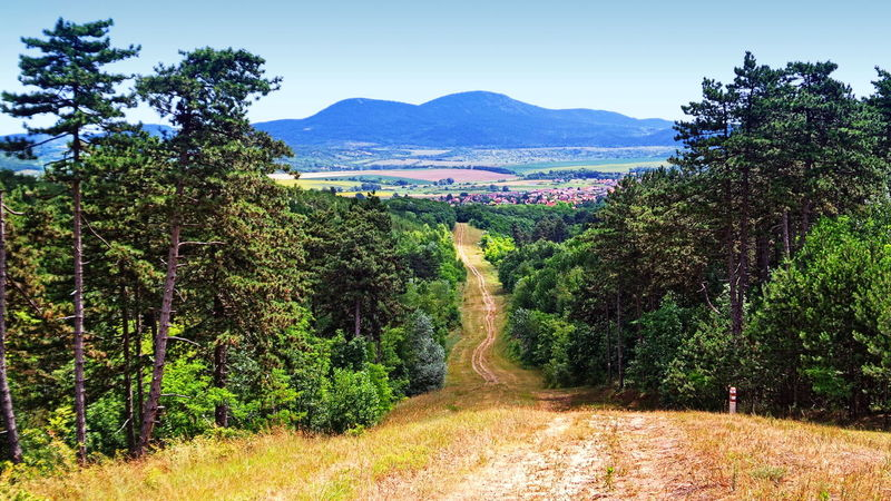 Road down from the hills among the pines Pine Beauty In Nature Clear Sky Day Forest Hill Landscape Mountain Nature No People Outdoors Pilis Pilisszántó Plant Road Scenics Tranquil Scene Tranquility Tree Woods