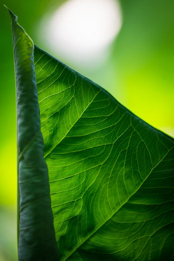 Close-up of leaf