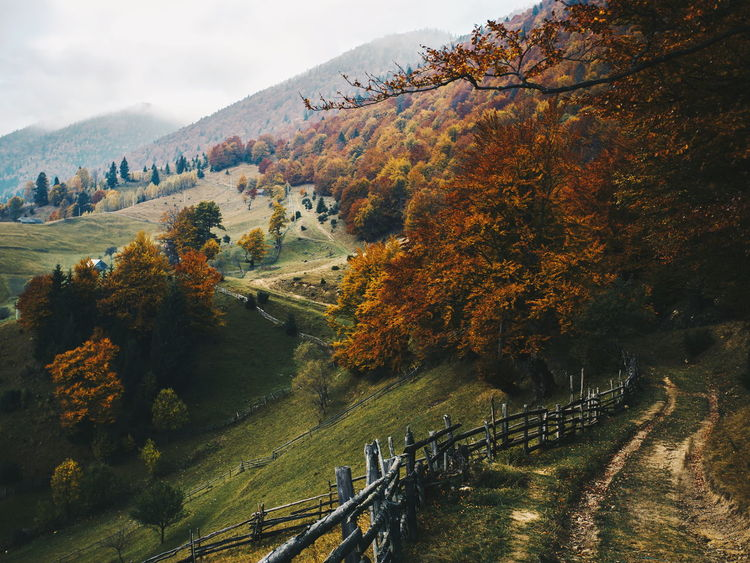 Nature Tree Autumn Beauty In Nature Beauty In Nature Change Day Fence Landscape Mountain Nature Nature_collection No People Outdoors Pathway Railing Road Rural Scene Scenics Sky Tranquil Scene Tranquility Tree Village Wallpaper