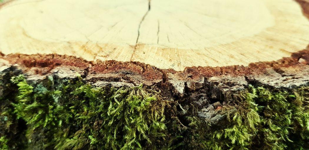Birkenstamm Birke Stumpf Is Trumpf Wurzeln Wood Wood Tree Grass Growing Tree Stump Textured