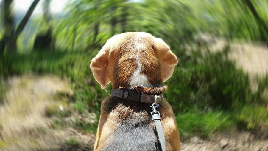 Rear view of dog on field