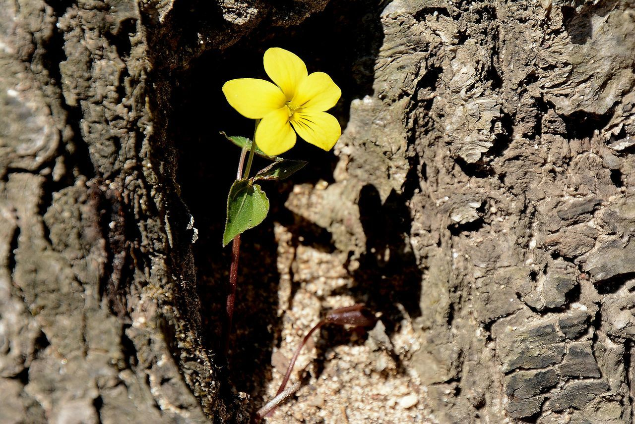Close-Up Of Yellow Flower Blooming By Tree Trunk