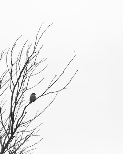 Bird at Tower