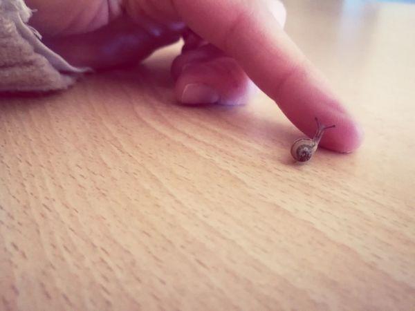 Fingers Little Snail🐌 Lumaca