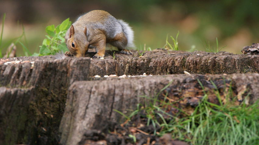 Animal Wildlife Animals In The Wild Day Focus On Foreground Full Length Mammal Nature No People One Animal Outdoors Plant Primate Rodent Timber Tree Vertebrate Wood - Material