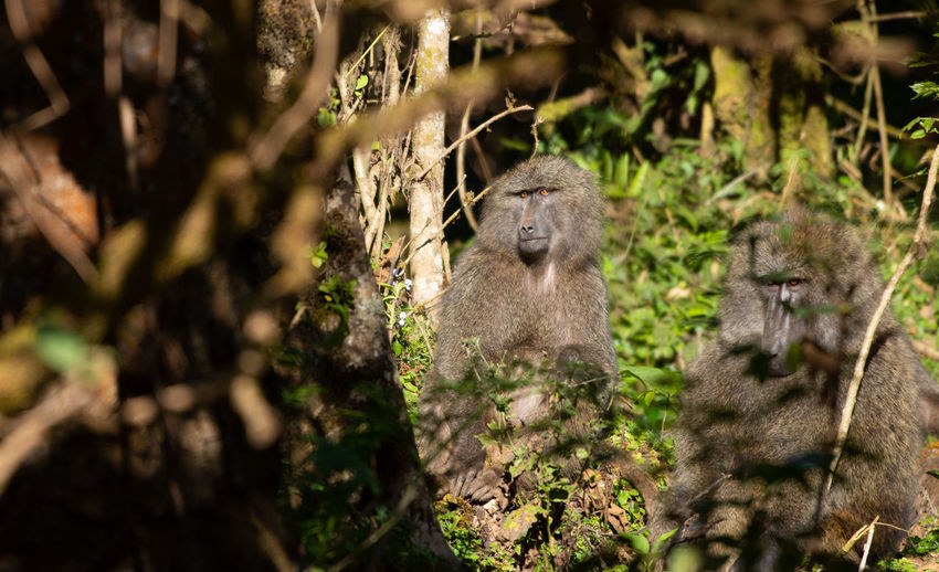 View of a monkey in forest