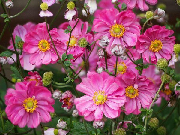 Fokus auf jede einzelne Blüte