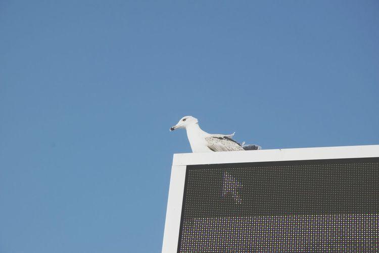 Free Space Arrow Bird Selected Led Display Display Seagull Perching Bird Of Prey Clear Sky Stork Blue Sunny Sky Beak