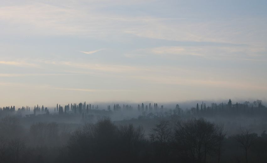Fog. Fog Sky