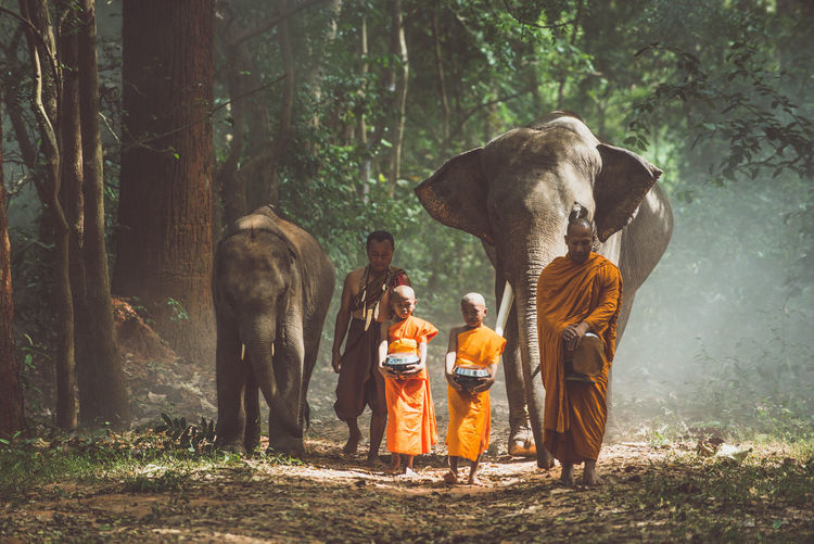 View of monks with elephant walking in forest