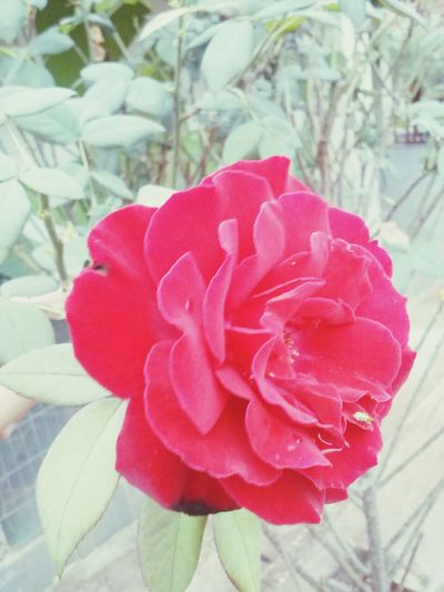 Rosé Principenegro
