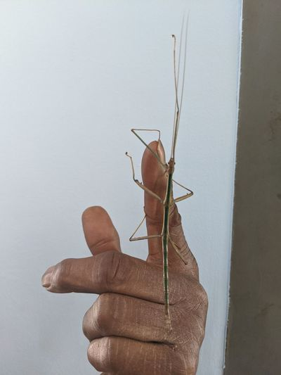 Close-up of hand holding insect against wall