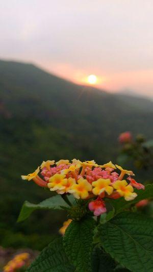 Sun Hills Pune