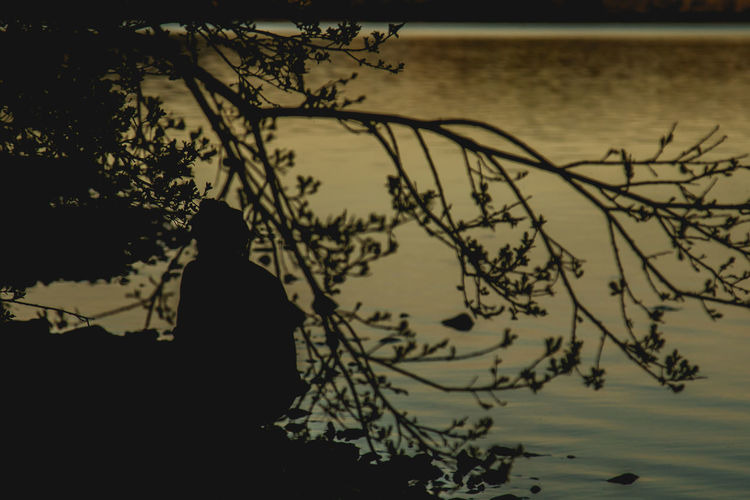 Beach Beauty In Nature Branch Day Men Nature One Person Outdoors People Real People Scenics Sea Silhouette Sitting Sky Standing Sunset Tranquility Tree Water