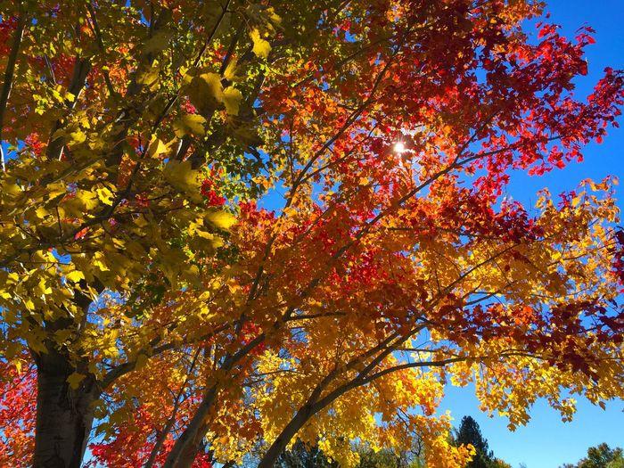 Trees Fall