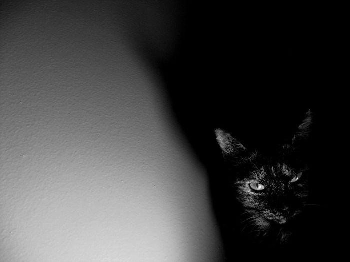 Lurking Black
