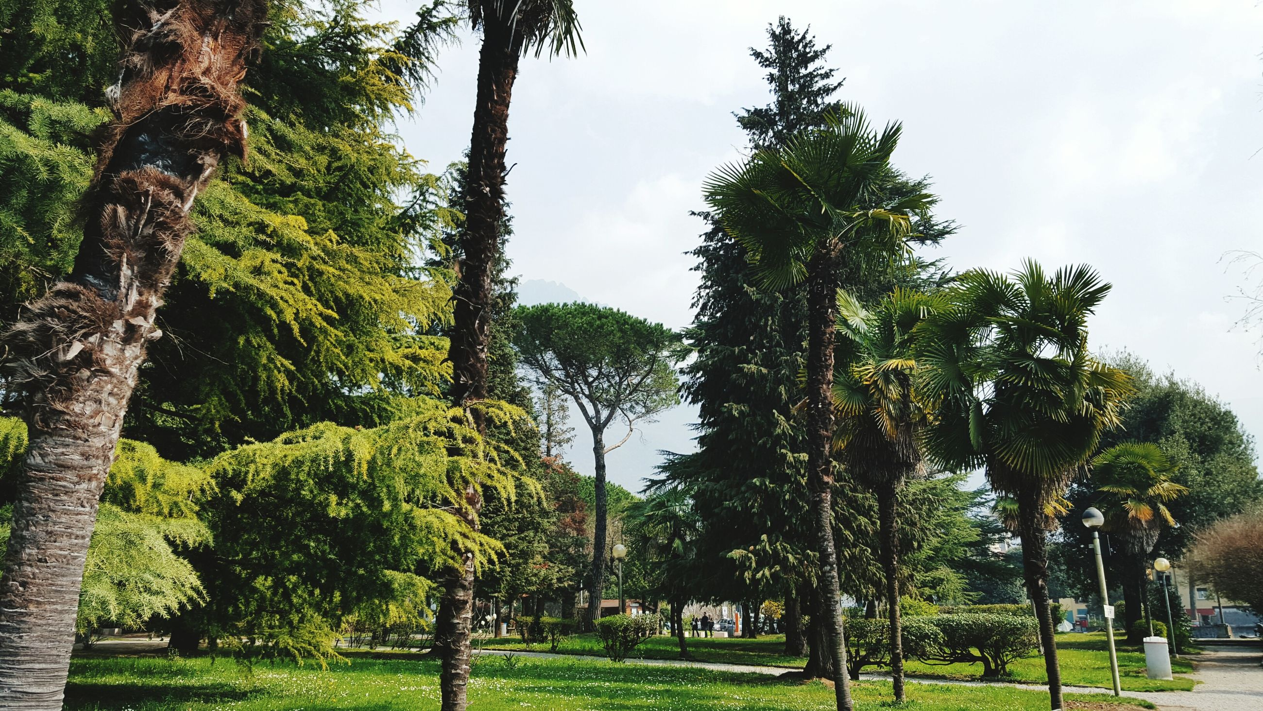 Nature Green Plant Green Color Trees Lecco Lake Italy View Family Day 🌲🌳🌴🌳🌲