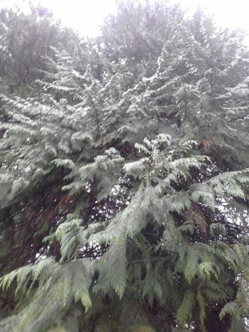 Nature Winter Tree Cold Temperature Beauty In Nature Growth No People Sky