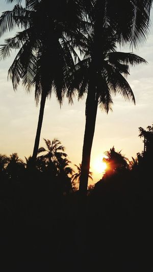EyeEmNewHere Sunset Tree Nature Sun Scenics Silhouette No People Beauty In Nature Dramatic Sky Sky Palm Tree Outdoors Day Miles Away