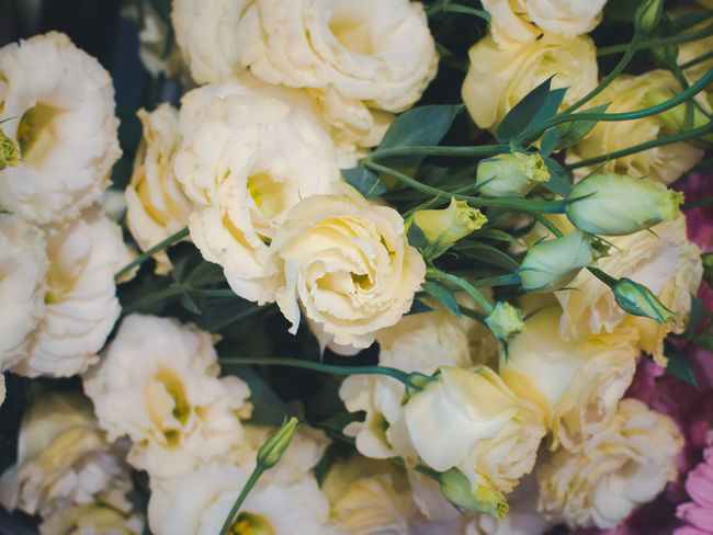Beauty In Nature Bouquet Close-up Day Flower Flower Head Fragility Freshness Indoors  Lizianthus Nature No People Petal White Color