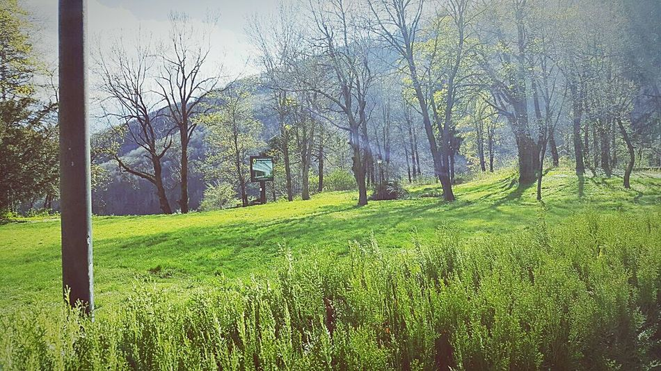 Tree Growth Nature Green Color Beauty In Nature Tranquility Field No People Outdoors Tranquil Scene Scenics Grass Day Sky Landscape Lush - Description Freshness Cinegetic Museum Brasov Romania Posada EyeEm Nature Lover EyeEmNewHere