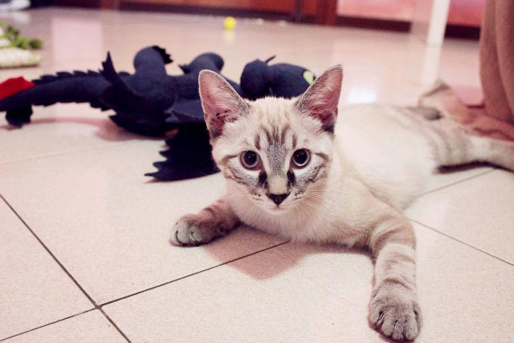Cats Of EyeEm Cats 🐱 Cat Cat Lovers Catsofinstagram Close-up Domestic Animals Domestic Cat Feline Gatto Hugo The Cat Pets
