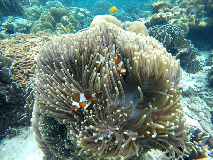 Gopro Sea Krabi Thailand Beauty In Nature Tavel Adventure Nature Beach Under These A