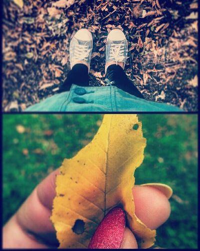 Helloautumn Autumn Autumn Leaves Autumn Colors Sunny Day ThatsMe Nice