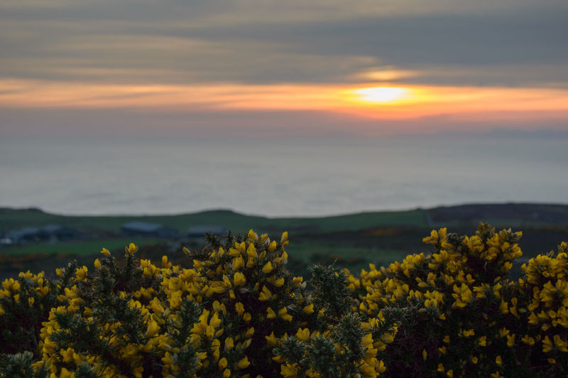 Beauty In Nature Clouds Cregneash Field Flower Freshness Gouse Isle Of Man Landscape Nature Outdoors Sunset Tranquility Yellow