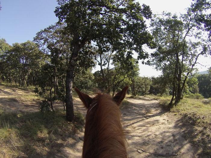 Sierra De Lobos First Eyeem Photo