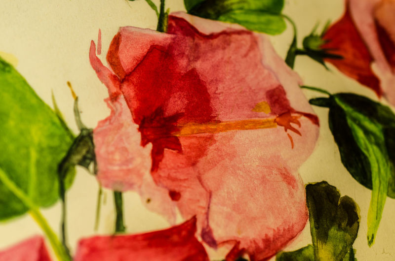 Close-up Day Indoors  Many Beautiful Flowers! My Own Paintings No People Some Time Ago Years Ago