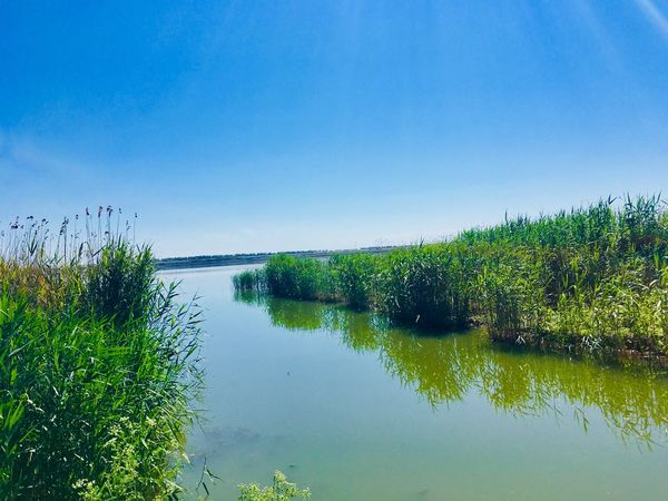 Water Sky Reflection Tranquility Scenics - Nature Plant Lake Green Color Copy Space Tree No People Beauty In Nature Tranquil Scene Growth Clear Sky Nature Day Blue Idyllic Outdoors