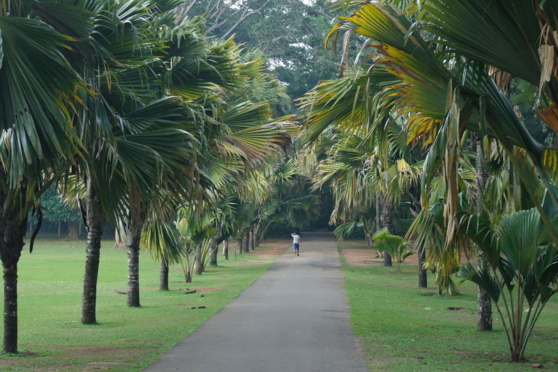 Road in botanic garden Beauty In Nature Nature Palm Tree Park Plant The Way Forward Tree Tropical Climate EyeEmNewHere