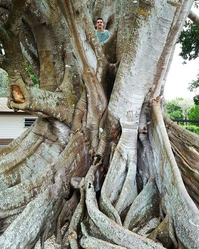 120 year-old Mysore fig tree, Ft. Myers, FL TreePorn Tree Trunk Amazing Nature Trees Fig Tree Old Tree