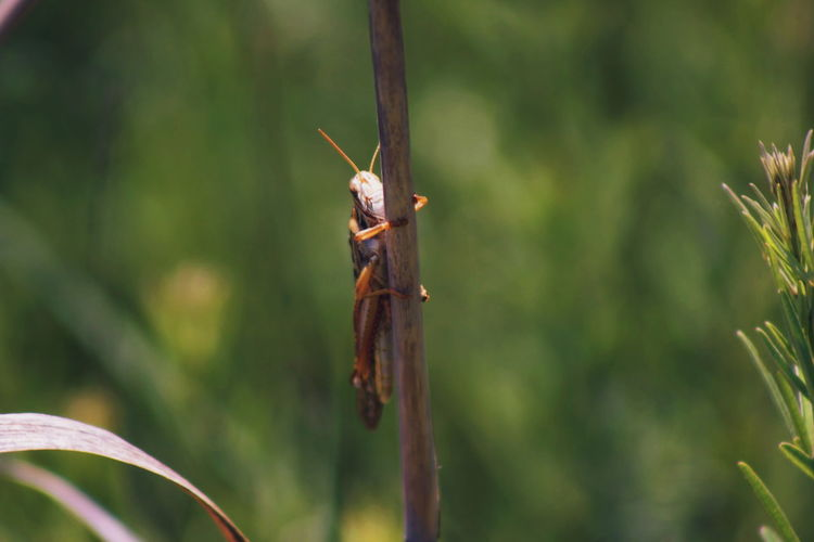 Grasshopper in it's natural habitat. trying to blend in.