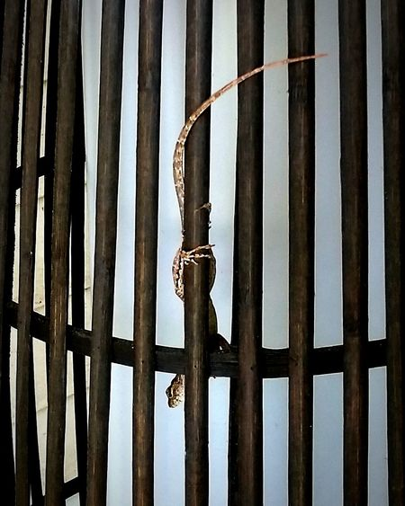 Behind Bars Leaping Lizards Vertical Upside Down Reptiles Lizards Outdoors Mission Impossible Resist Break The Mold
