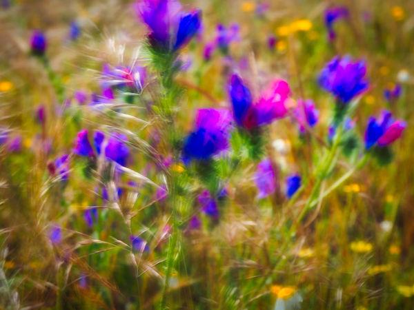 In Bloom Blooming Petal Plant Life Botany