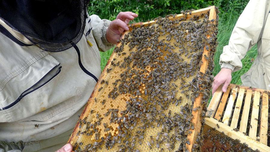 High angle view of bee on hand