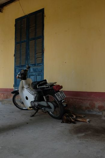 Motorcycle Sleeping Dog Travel Photography Viet Nam Vietnam Architecture Day Dog Mode Of Transport Moto Motorcycle Scooter Sleep Sleeping Vietnam Trip