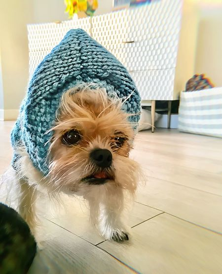 When someone makes you a cap... you wear it...that's called manners - TBone Looking At Camera No People Close-up Day Portrait Animal Themes Mammal Domestic Animals Indoors  One Animal Pets Dog Side Eye Brusselsgriffon Brussels Griffon Brussels Everydayimbrusseling Beardstyle Bearded Dogs With Beards Dog With Hat Knit Knitted Hat Handmade Artisan Knit Cap