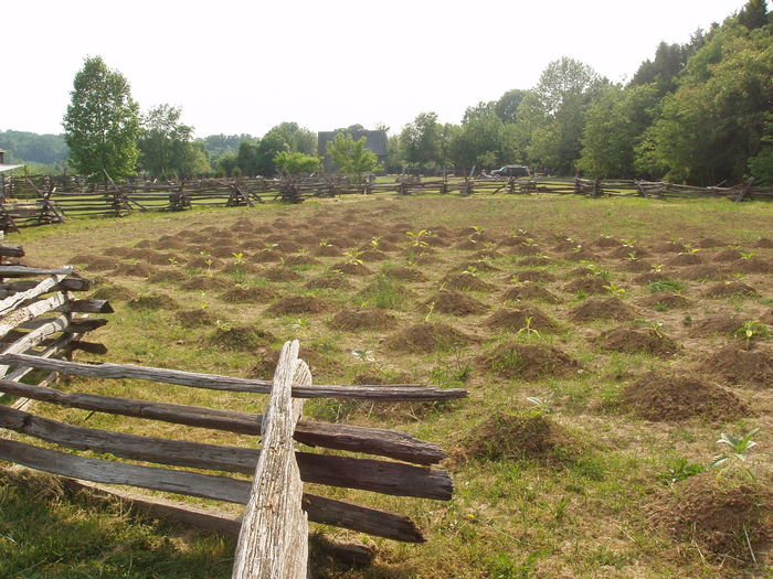 Colonial Crop  Fence Field Grass Grassy Landscape Leading Railing Rural Scene The Way Forward Tree Tree Trunk Wood Wood - Material Wooden Wooden Fence