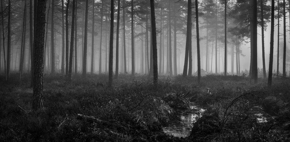 Autumn in Dalarna, Sweden Autumn Black And White Blackandwhite Dalarna Environment Fall Fog Foggy Forest Gagnef Landscape Mist Nature Non-urban Scene Northern October Outdoors Scandinavia Silence Sweden Tranquil Scene Tree Wilderness WoodLand Woods