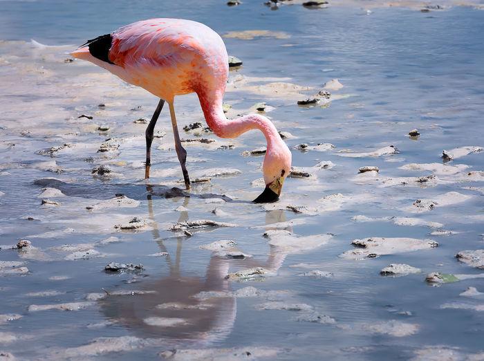 Birds drinking water in a lake